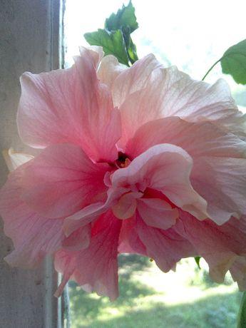 Флорист, уход за растениями