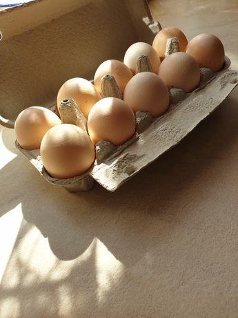 Jaja wiejskie cena za 10 szt
