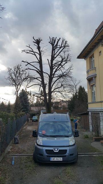 Wycinka drzew przycinanie korony drzewa z wywozem pociętych gałęzi
