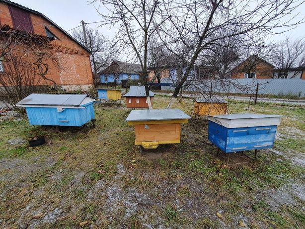 Бджолині вулики ульи