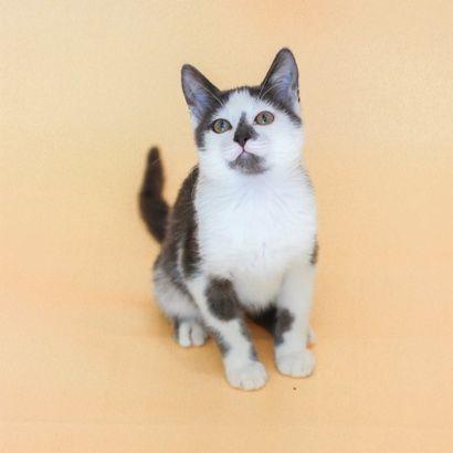 Крошка Лиям ищет семью котенок котята кошеня кот кошка котеня кошеня