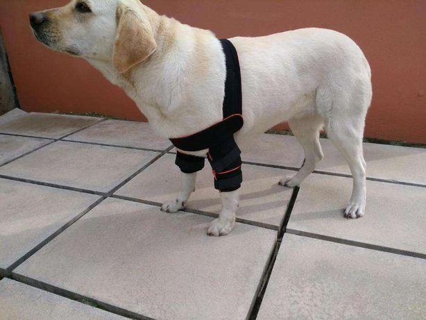 Cotoveleira Dupla para Cães (Protetor para os cotovelos)