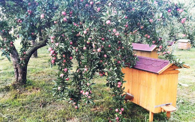 Ule do sprzedania, z pszczolami lub bez