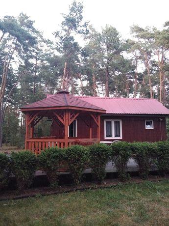 Domek w lesie koło Łasku