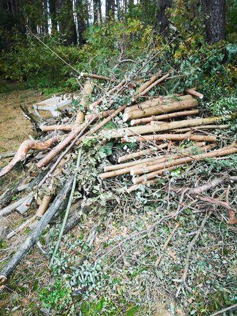 Drzewo, drewno , gałęzie na opał oddam za darmo