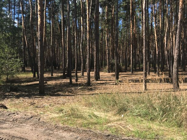 Шикарный участок в лесу в Буче