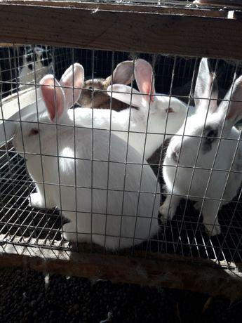 Продам кроликов разных