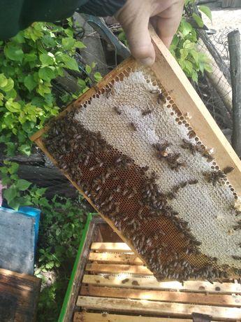 Мед с собственной пасеки, гречиха +разнотравье