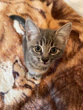 Девочка котенок кошечка