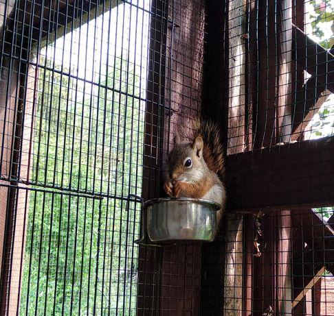 Rezerwacja. Wiewiórki Hudson. Z kwietnia tego roku.