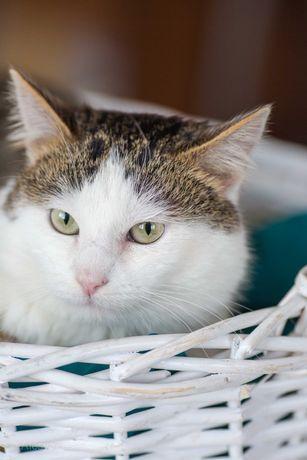 Арсений - супер-контактный кот в добрые руки