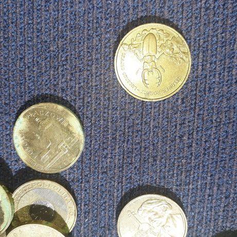 Moneta kolekcjonerska jelonek i inne