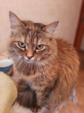 Кошка Маша в хорошие руки, срочно нужен дом