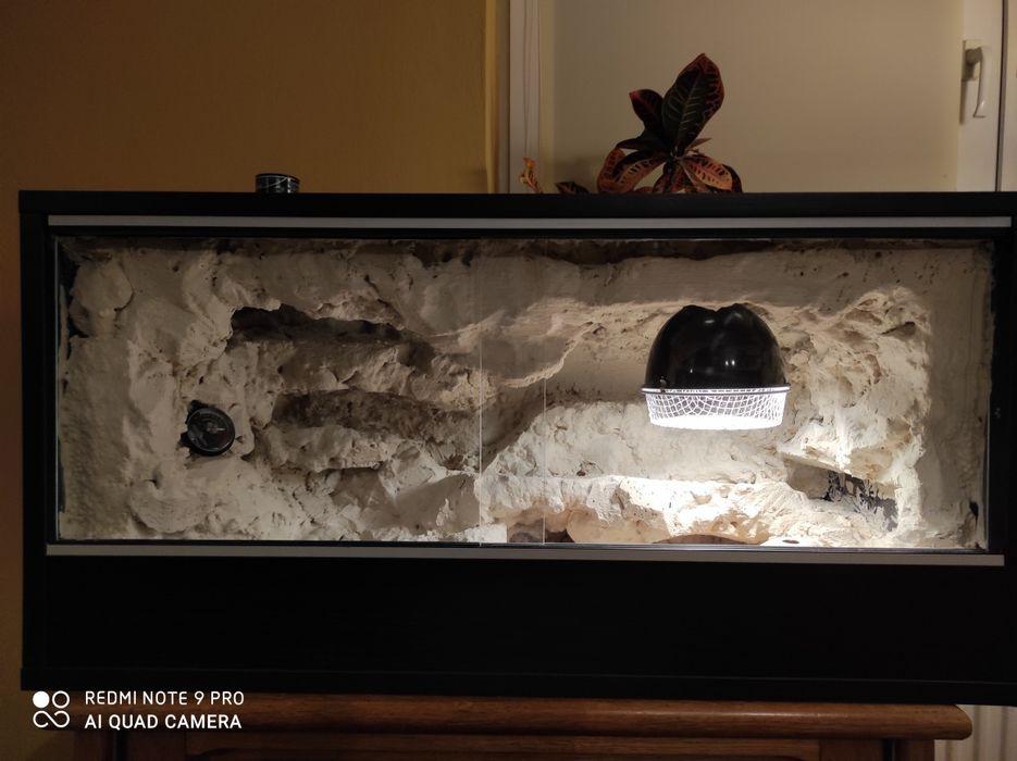 Terrarium z dwoma gekonami Piła - image 1