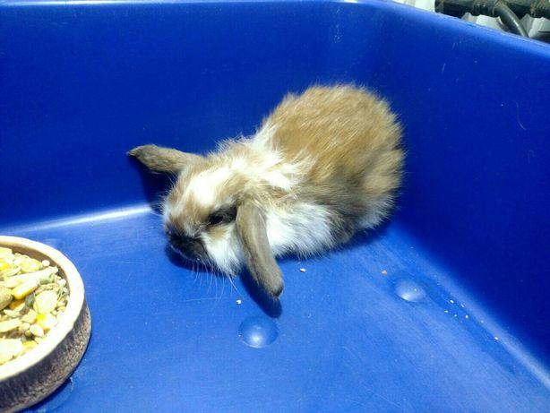 Интересные кроликиВислоухие