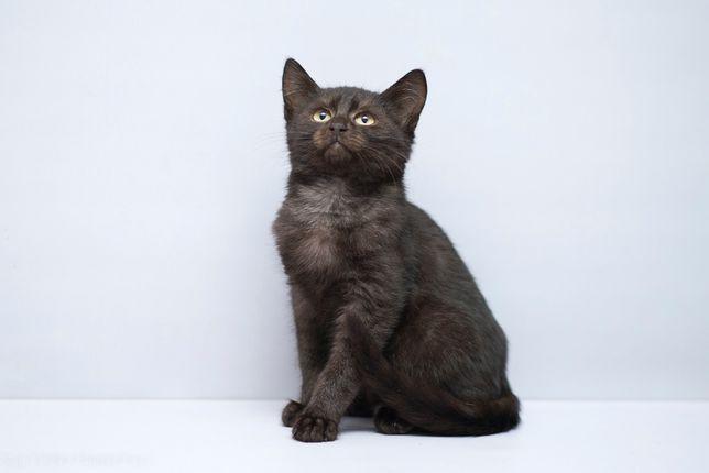 Отдам в хорошие руки котика мальчика Фарка .