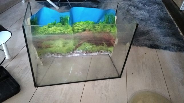 Akwarium do rybek