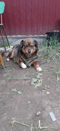 Молоденькая собачка в поиске дома!