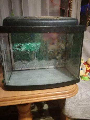 Akwarium około 26litrów