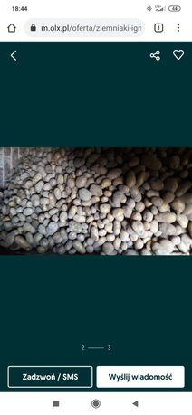 Sprzedam ziemniaki paszowe