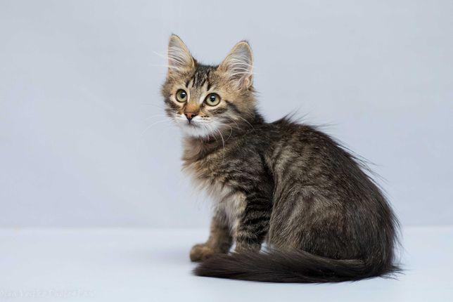 Отдам в хорошие руки котенка мальчика Грендика.