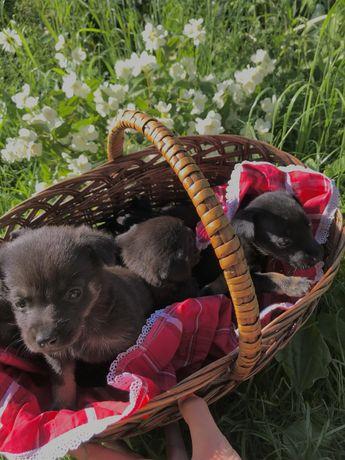 Собачки песики щенята