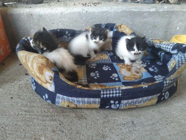 Gatinhos - adoção responsável