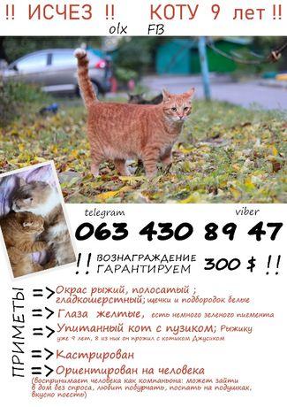 пропал рыжий кот, киевский район! 26 апреля