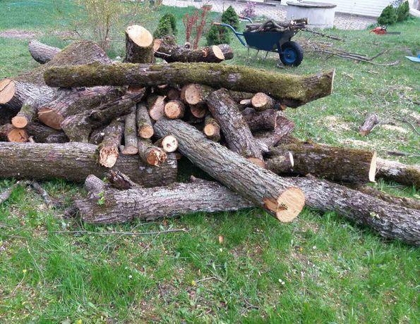 Drewno lipowe na sprzedaż