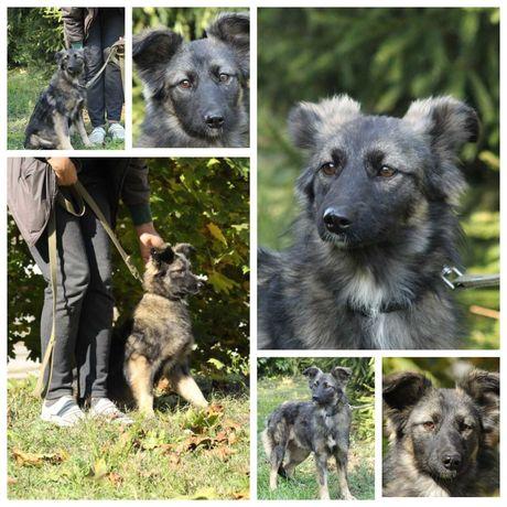 Пушистая небольшая собачка Мила, собака, стерилизована, 10 кг, до 1 г