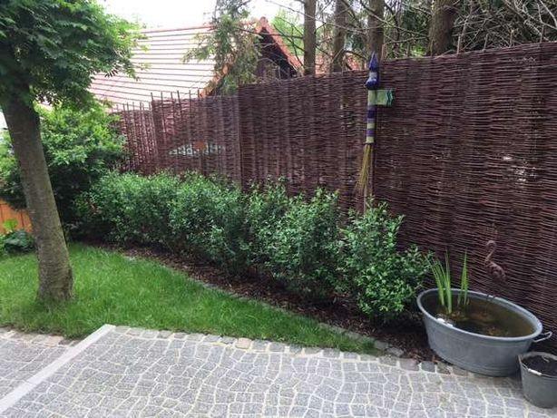 Płot wiklinowy niska cena panele wiklinowe ogrodzenia