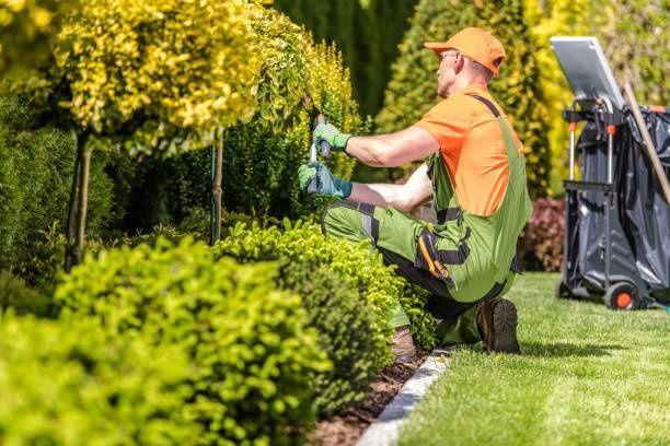 Usługi ogrodnicze koszenie glebogryzarka wertykulacja wycinka abonamen