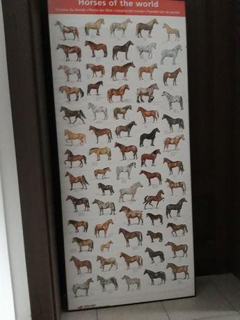 Rasy koni świata