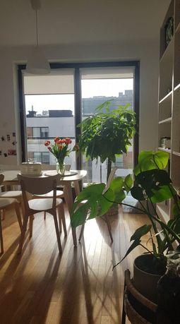 Stół i 4 krzesła białe z Ikei
