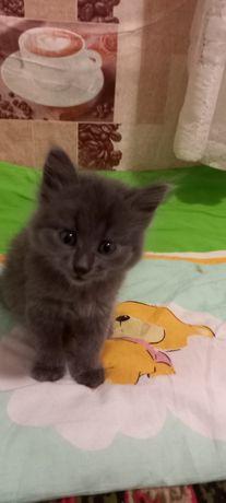 Милые котята в хорошие руки бесплатно. Котенок даром. Срочно.
