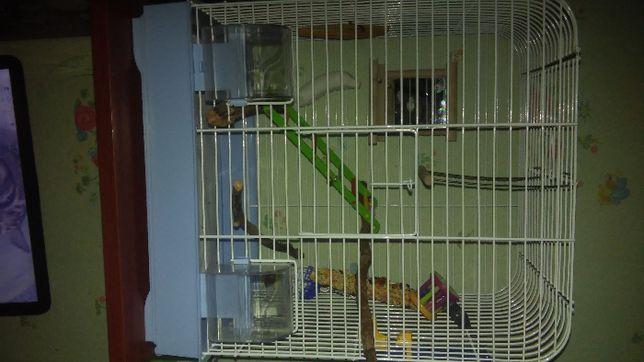 СРОЧНО!!! Клетка для попугаев