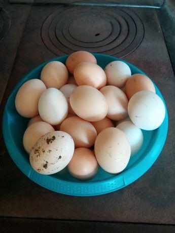 Wiejskie jajka Eco wolny wybieg