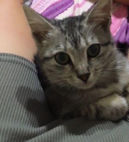 Котёнок, 3 месяца, девочка