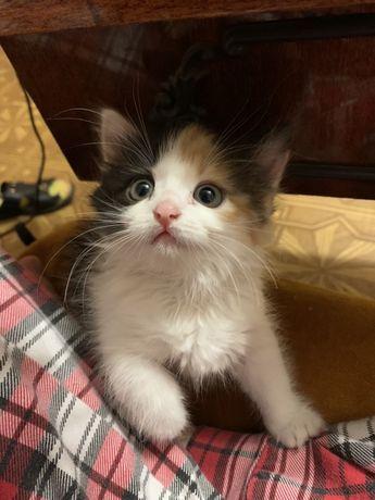 Отдам кошку 3 месяца