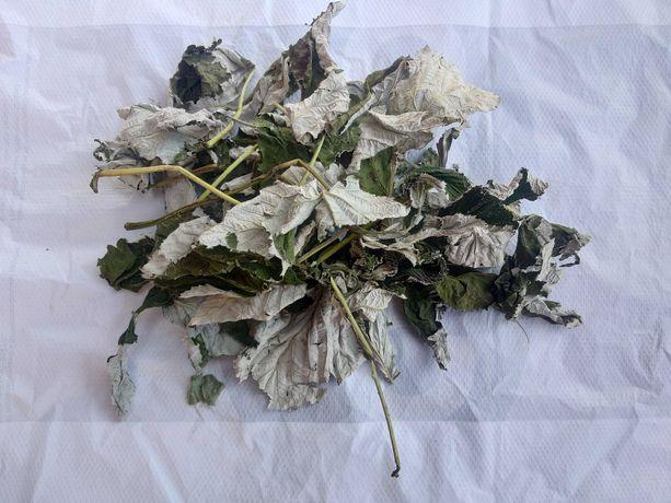 Малина, сушене листя малини, Rubus idaeus, листья малины, liście malin
