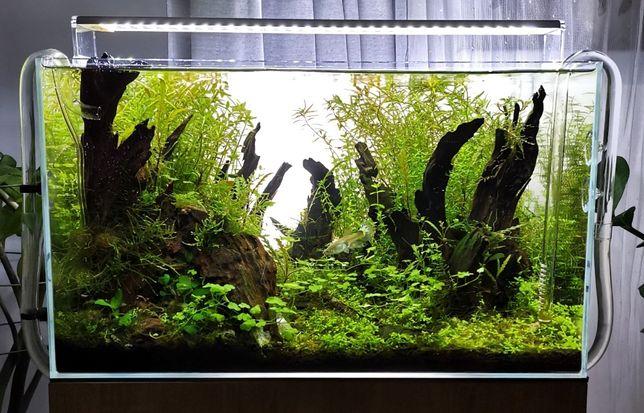 Zestaw akwariowy (OptiWhite, LED, Eheim, szafka)