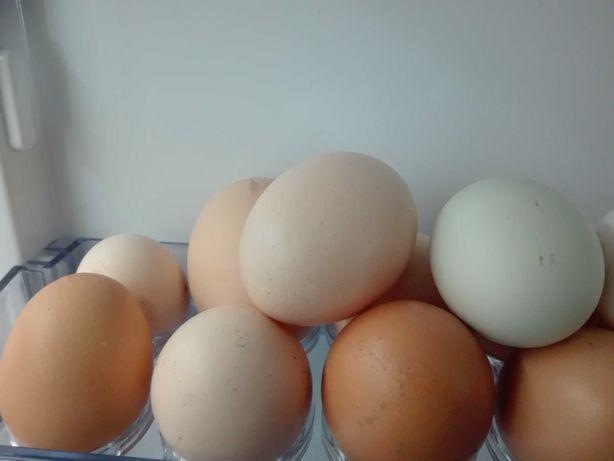 Jajka wiejskie,jajeczka dowóz