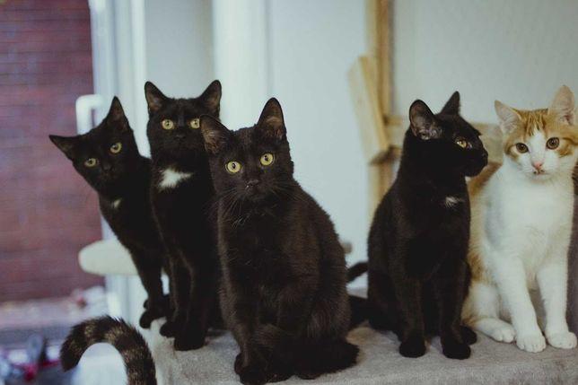 Kotka i kotek 5 miesięczny szukają domu lub domów