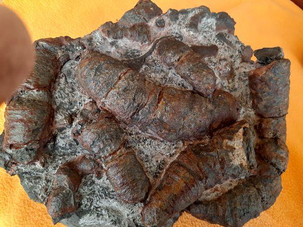Koral skamielina skamieniałość Bukowa  Góra 7.7 kg