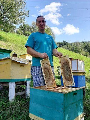 В наличии пчеломатки Карника Зингер ( Австрия, репродуктор)