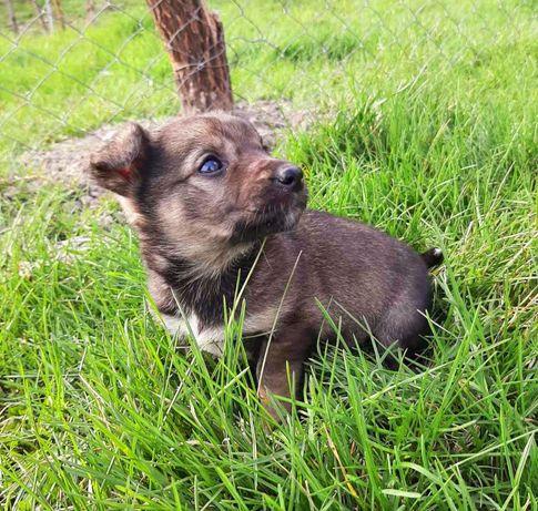 Очень маленький щенок в поиске дома