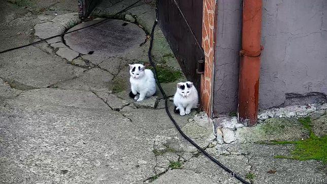 Dwie kotki poszukują domu