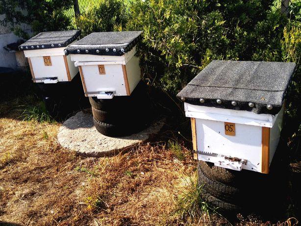Ule Dadant z pszczołami nowe