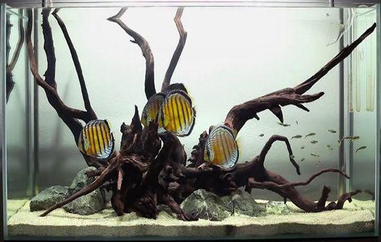 Профессиональное ОБСЛУЖИВАНИЕ, ПЕРЕВОЗКА аквариумов любого объема
