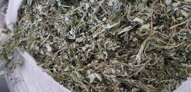Sprzedam suche rośliny lecznicze: korzeń żywokostu, korzeń galangalu.